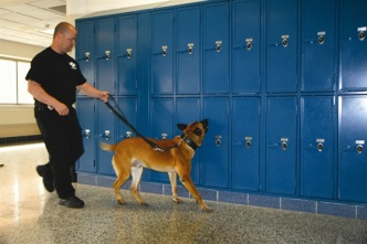 L-Photo9-dog-sniffing-locker-1